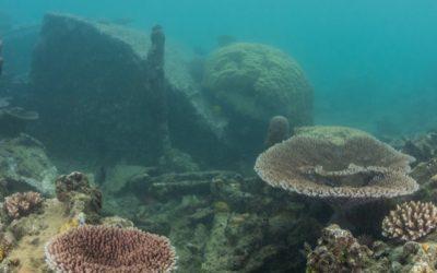 The Stunning Marine Reserve Around Ratua Island